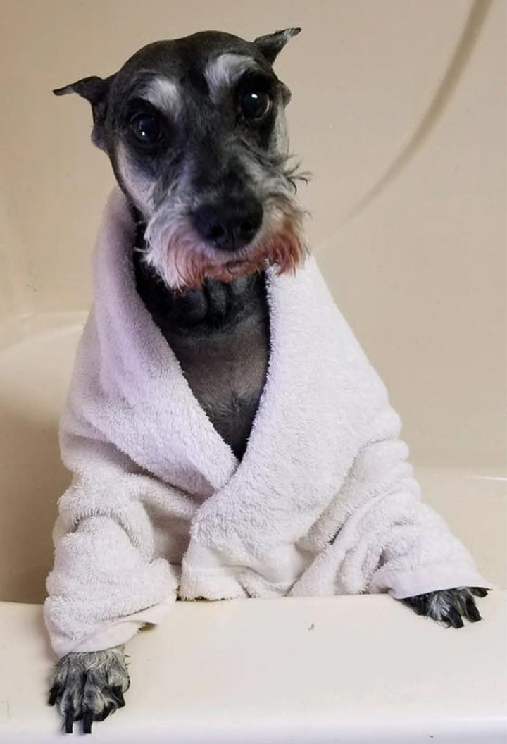 dog in a robe