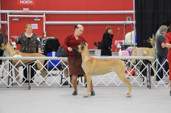 a handler and dog at a dog show