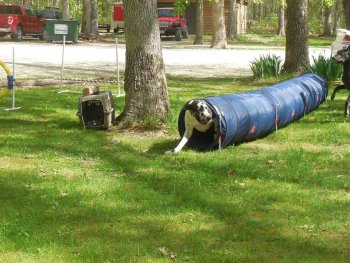 A dog playing in a tube