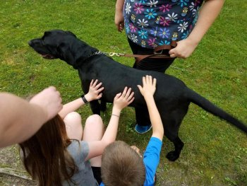 children petting a large dog